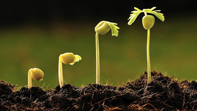 Resultado de imagen para plantas